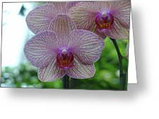 White And Pink Orchid Greeting Card