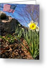 White And Yellow Daffodil Flower Greeting Card