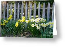 White And Yellow Daffodils Greeting Card