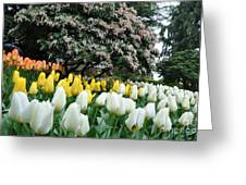 White And Yellow Tulips Greeting Card