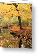 White Ash And Stream In Autumn Greeting Card