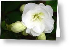 White Azalea  Greeting Card