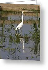 White Bird At June Lake Greeting Card