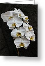 White Bliss Orchids Greeting Card