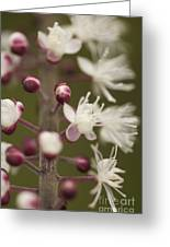 White Blooming Flowers Greeting Card