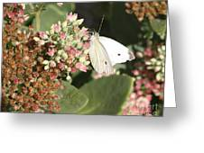 White Cabbage Greeting Card
