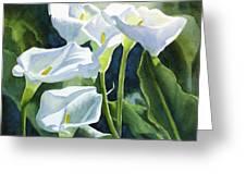 White Calla Lilies Greeting Card by Sharon Freeman