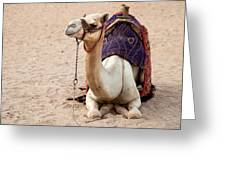 White Camel Greeting Card by Jane Rix