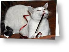 White Cat And Red Christmas Ribbon Greeting Card