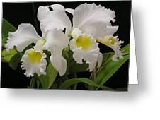 White Cattleyas Greeting Card