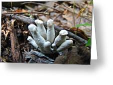 White Club Mushroom - Clavulina  Greeting Card