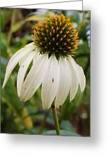 White Coneflower Greeting Card