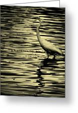 White Crane Greeting Card