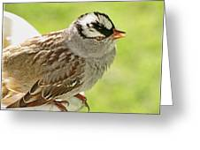 White Crowned Sparrow II Greeting Card