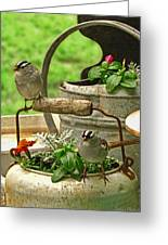 White Crowned Sparrows On The Flower Pot  Greeting Card