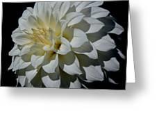 White Dahlia Greeting Card