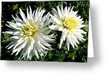 White Dahlias In Autumn  Greeting Card