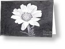 White Daisy Flower Greeting Card