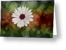 White Daisy In A Sunset Greeting Card