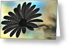 White Daisy Silhouette Greeting Card