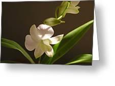 White Dendrobium 2 Greeting Card