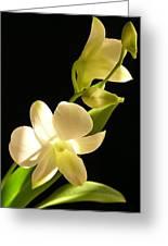 White Dendrobium Greeting Card