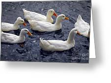 White Ducks Greeting Card