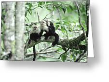 White-faced Capuchins Greeting Card