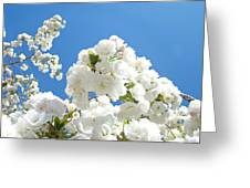 White Floral Blossoms Art Prints Spring Tree Blue Sky Greeting Card