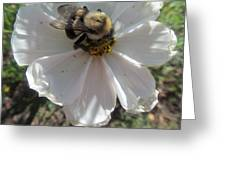 White Flower And Bee Greeting Card