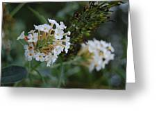 White Flower Greeting Card by Beverly Hammond