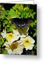 White Flower Butterfly Greeting Card