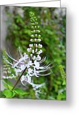 White Flower Greeting Card by Lori Kesten