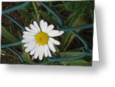 White Flower On The Fence Greeting Card