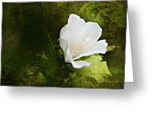 White Flower Texture Greeting Card