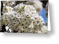 White Flowering Tree Floral Greeting Card