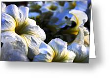 White Flowers At Dusk 2 Greeting Card