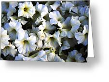 White Flowers At Dusk Greeting Card