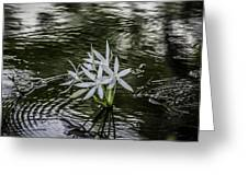 White Flowers In The Stream Greeting Card