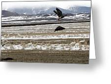 White Fronted Goose - 0015 Greeting Card