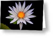 White Frost Flower Greeting Card