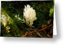White Fungus Greeting Card
