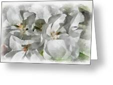 White Geraniums - Watercolor Greeting Card