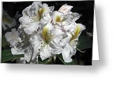 White Gold Greeting Card