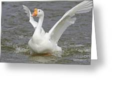 White Goose Greeting Card