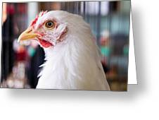 White Hen Greeting Card