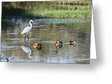 White Heron And Baby Ducks Greeting Card