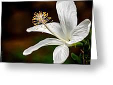 White Hibiscus II Greeting Card