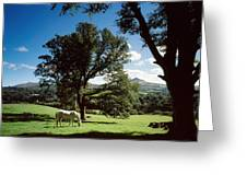 White Horse At Powerscourt, Co Wicklow Greeting Card by The Irish Image Collection