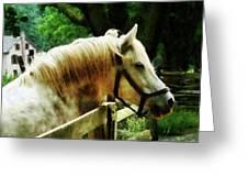 White Horse Closeup Greeting Card